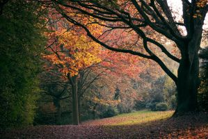 autumn 1 by spsera