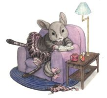 Chinchilla Reading by LMMegyesi