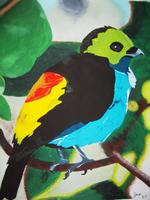 Paradise Tanager by Shinedriger