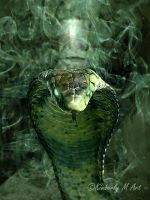 The Serpent by Kimberly-M