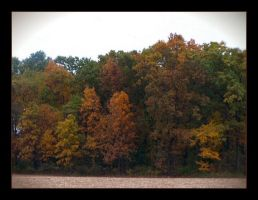 Autumn Trees by syrenemyst