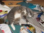 Sewing-room cat by Bigfoot-Ti