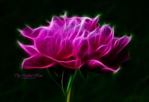 Fractal Peony by this-darkest-hour