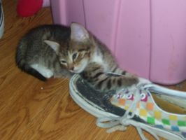 kitty by my shoe by 222222555555
