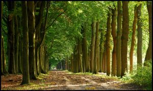 Lightthought 469 by lightthinker