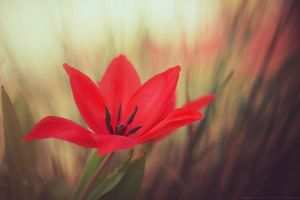 my red love by CliffWFotografie