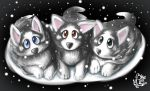 Husky Puppies by Blue-Paint-Sea