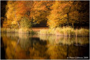Autumn Gold by Photo-Joker