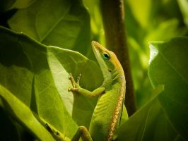 Anole Lizard (South Carolina) by livdrummer