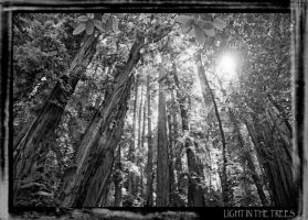 Light in the Trees. by klausalan
