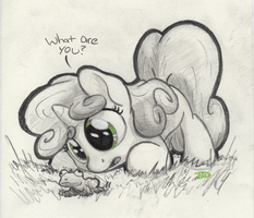 Curiosity by Bobdude0
