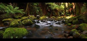 Stream Of Tasmania by CainPascoe