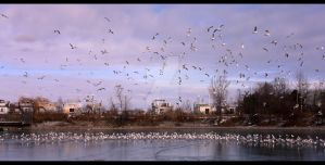 Flock O Seagulls by Faytte