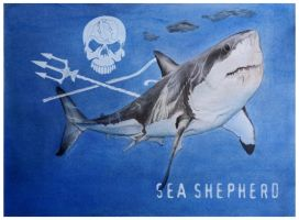 Great White by agapetos