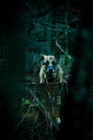 Wolf at the door by Nikander