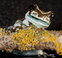 Happy milk frog by AngiWallace