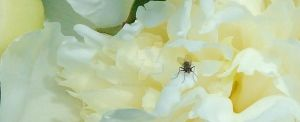 Fly on a Flower by mitchellp
