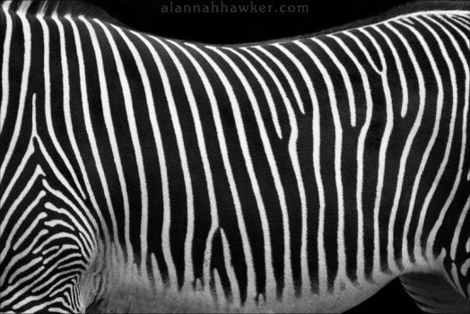 Black and White by Alannah-Hawker