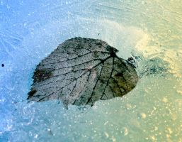 Leaf in ice by jankolas