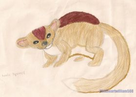 Flying Koala Squirrel by wildheartwilliam508