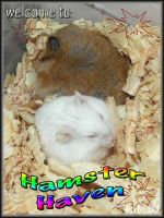 Contest entry hamster haven by MoNyOh
