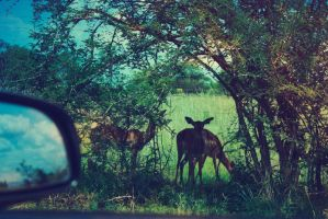 A South African Safari by UntamedUnwanted