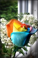 Rainbow Rose 2 by Aeltari
