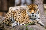 Mama Jag by DGPhotographyjax
