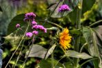Flowers And Flowers by yanness
