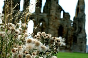 Grasses at the Abby by AshleySmith