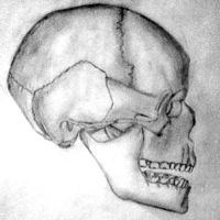 Skull by theworldiveknown