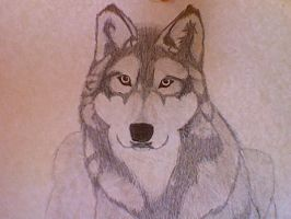 Wolf_1 by seyrii