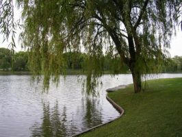 Weeping willow by sheebsa