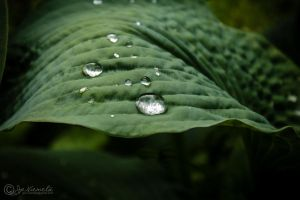 Droplets by J-PN