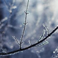 ...winter -2-... by OlegBreslavtsev