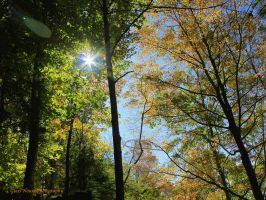 Sunlit Autumn by GlassHouse-1