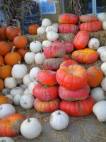 Pumpkins 2 stock by thiselectricheart