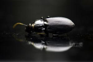 Black Beetle by RoadKillConcepts