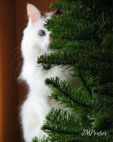 Kismette and the Christmas Tree by JMPorter