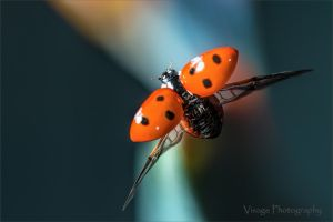Flight of The Lady Bird by GJ-Vernon