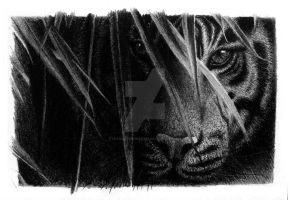 Eye of the Tiger by leandroconradt95