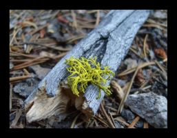 On the Forest Floor by hikerchris