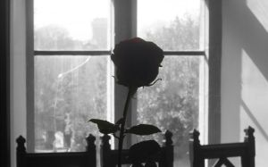 the truth beneath the rose by dynamicdestruction