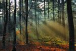 Sunbeams in the wood by Peenbuiker