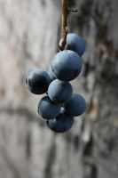 Blue Berries I by Verenth