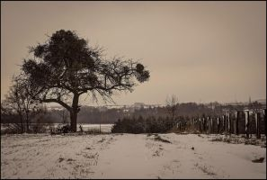 Dream of winter by LiveInPix