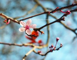 Spring Is In Bloom by Hitomii