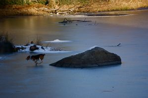 Dog on Ice by OEMminus