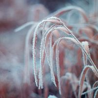 white frost II by Zi0oTo