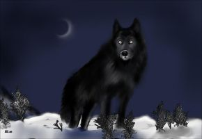 Black wolf in snow by beckis52